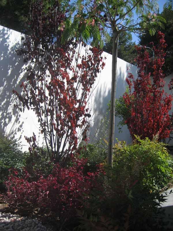 Detalle prunus arbustivos