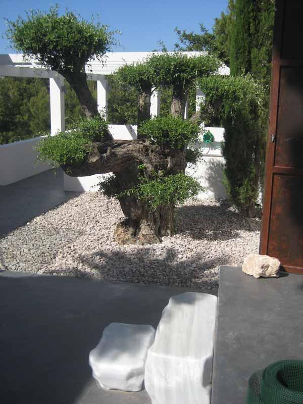 La escalera de acceso con el olivo bonsái detrás.