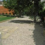 Orchar and fruit trees