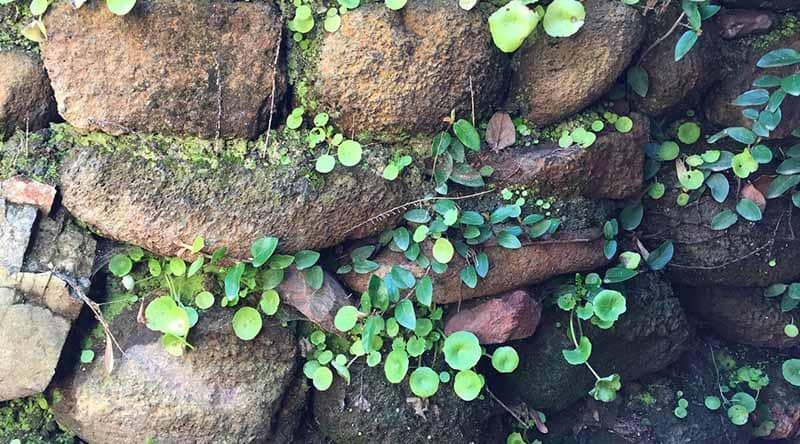 Pequeño muro hecho con piedra local.