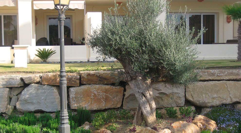Jardinera de aromáticas y olivo.