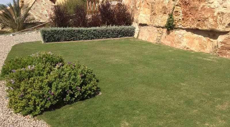 Lawn meadow on the lower terrace