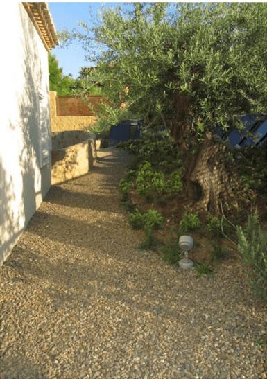 Pasillo lateral con olivos centenarios y romero rastrero