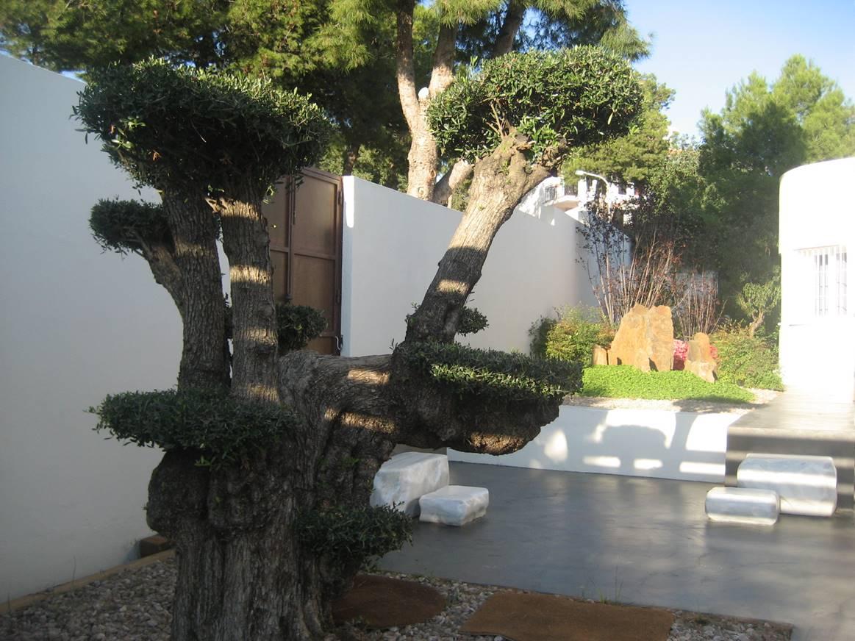 bonsai villa nan