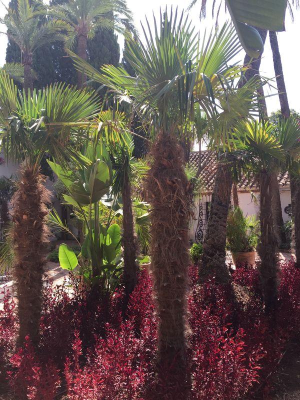 Contraste entre los colores y texturas de la vegetación.
