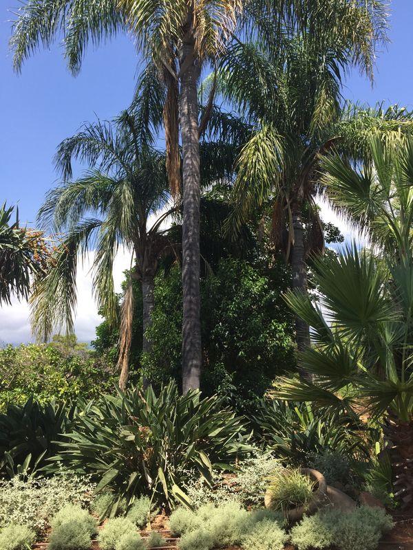 Cortijo SF palmeras